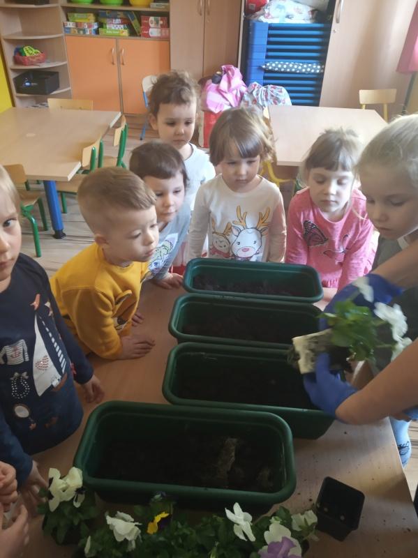 Sadzenie wiosennych kwiatuszków (Maluszki)
